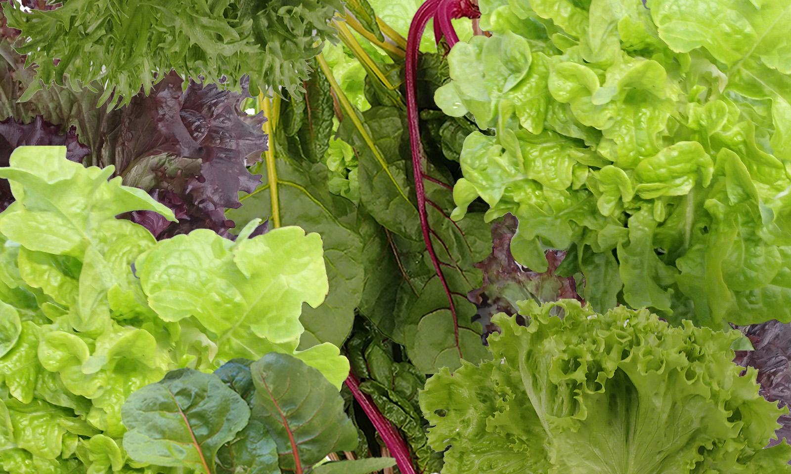Vegetables01